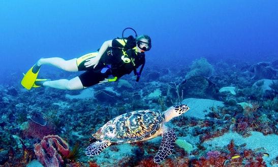 Diving Trips In Rabaul
