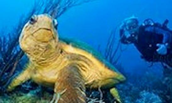 Diving Trips In Boynton Beach, Florida