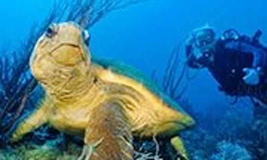 Diving Trips In Boynton Beach, Florida