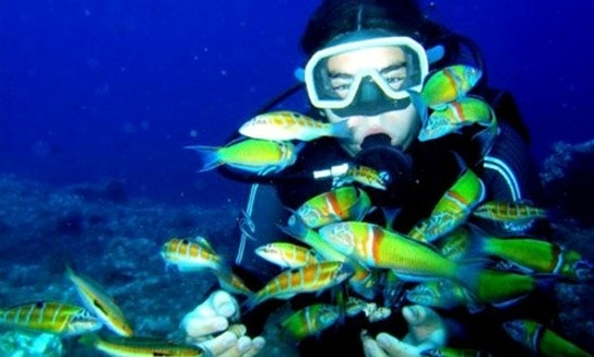 Discover The Variety Of Underwater Marine Life In Antalya, Turkey