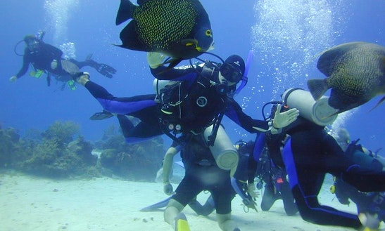 Diving Trips In New York, New York