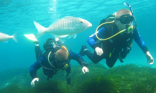 Diving Trips & Courses In Ayia Napa