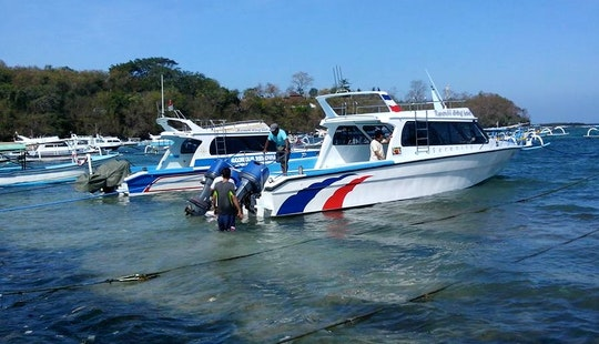 Daily Diving Trips In Indonesia