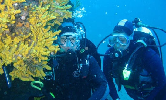 Diving Trips In Mokosica, Croatia