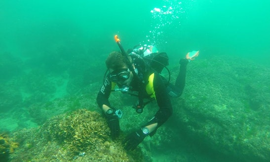 Diving Trips And Courses In Vama Veche