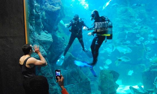 Mergulho Aquário - Aqua Natura Madeira Hotel - Ilha Da Madeira