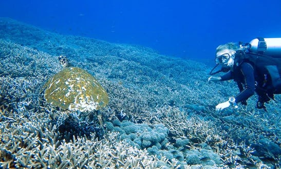 Awesome Diving Trips In Komodo And Rinca Islands, Indonesia