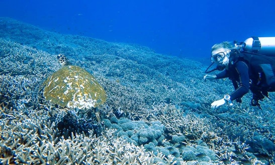 Diving Trips In Komodo