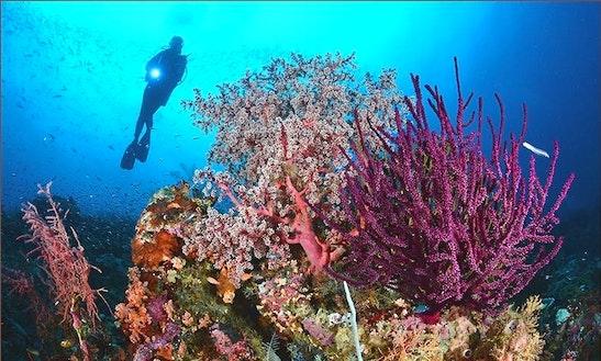 Diving Trip In Sorong Timur, Indonesia