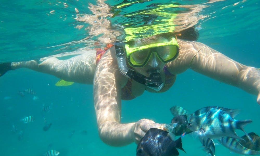 Perfect Snorkeling Tour in Kuta Selatan, Indonesia