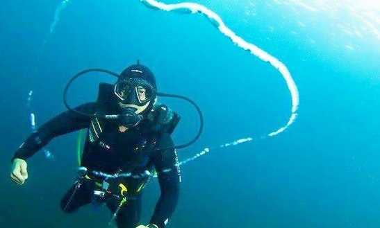 Muck Diving And Fun Diving Trips With Padi Dive Masters In Bali, Indonesia