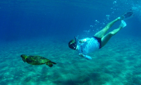 Guided Beach Snorkel Tour Led By A Marine Naturalist / Instructor In Lahaina