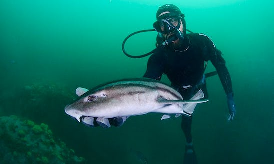 Shark Diving On Tiger Beach In West Palm Beach, Florida