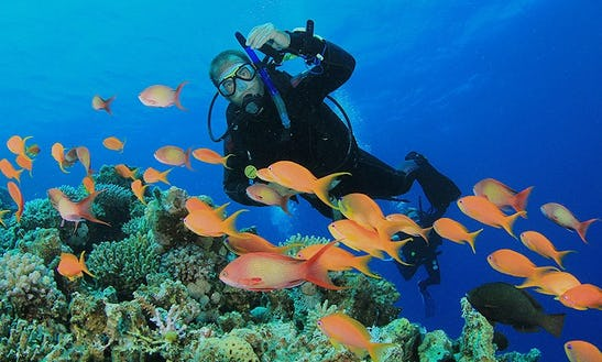 Diving Courses Coach By A Multilingual Padi Instructor In Trincomalee, Sri Lanka