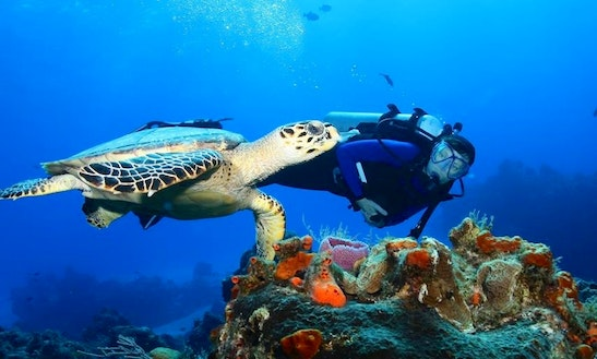 Diving Trips In Willemstad