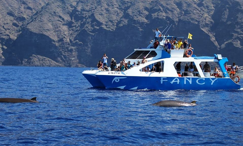 Whale Watching Tour in Tarajal