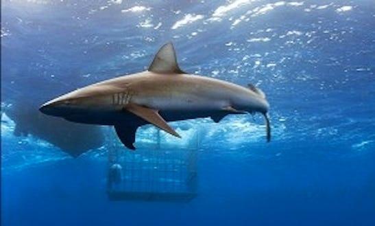Diving Pelagic Dive Tours In Haleiwa, Hawaii