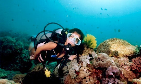 Diving Trips In Malay