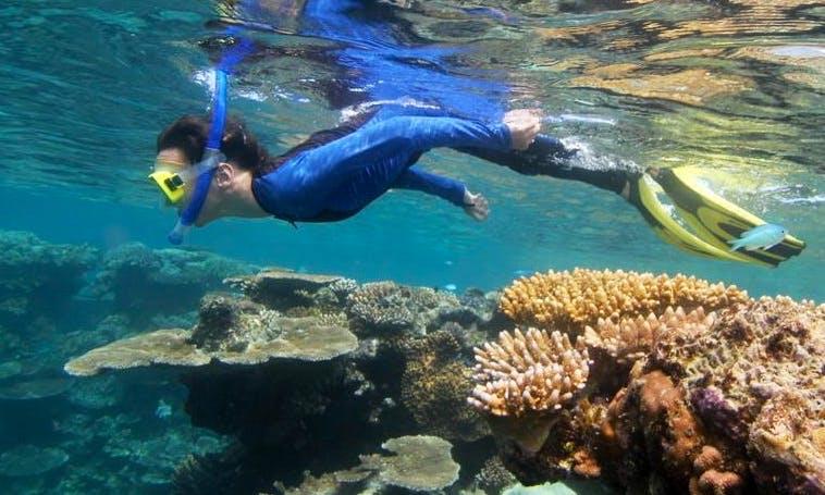 Learn to Snorkel in Port Douglas