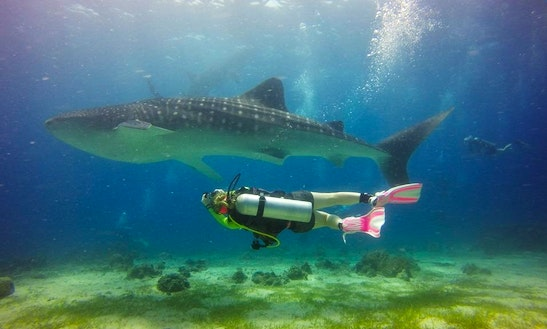 Scuba Diving In New Southwales