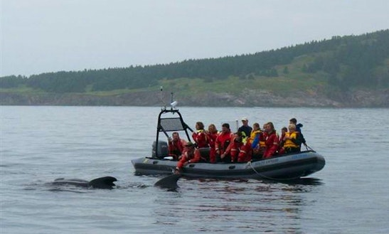 Whale Watching In Ingonish Beach
