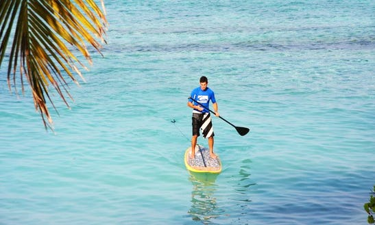 Paddleboard Hire And Lessons In Dee Why