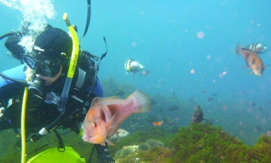 Learn Scuba Diving In Auckland, New Zealand