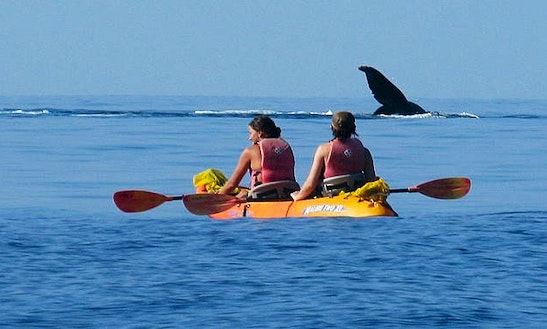 Guided Kayaking On Gilligan Island, Hawaii