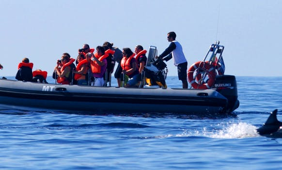 Dolphin and Whale Watching Tour In Açores Island