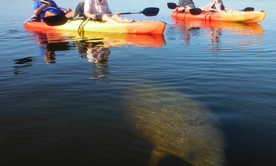 Paddle The Day Away On Our Kayaks In Bonita Springs