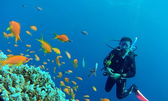 Scuba Diving Experience And Padi Scuba Dive Courses In South Sinai Governorate, Egypt