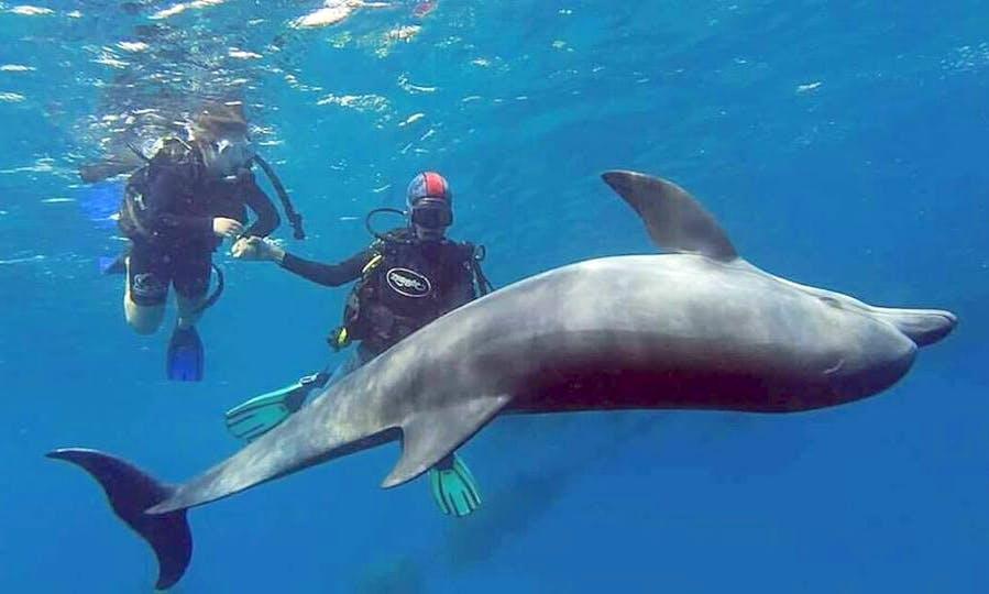 Enjoy Diving Trips in Eilat, Israel