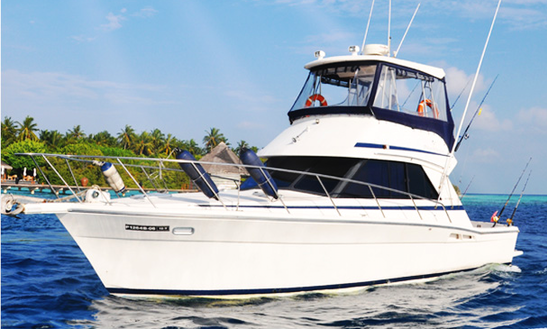 Enjoy Fishing In Malé, Maldives On 40' Sport Fisherman