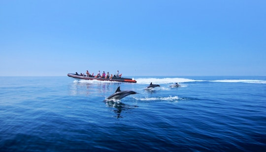 Dolphin Watching And Caves Tour Cruises In Quarteira