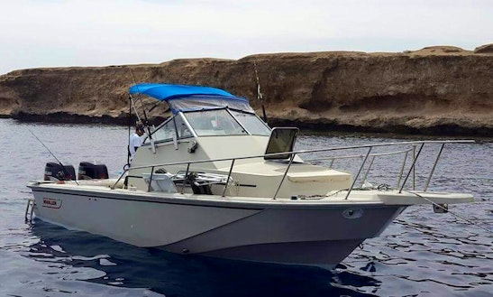 Sport Fisherman Fishing Charter In Red Sea Governorate
