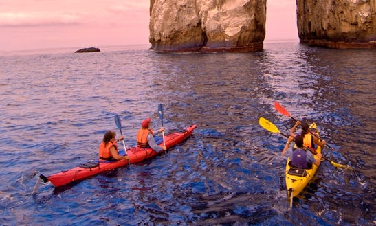 Enjoy Kayak Whale Watching Tours At Discovery Islands, British Columbia