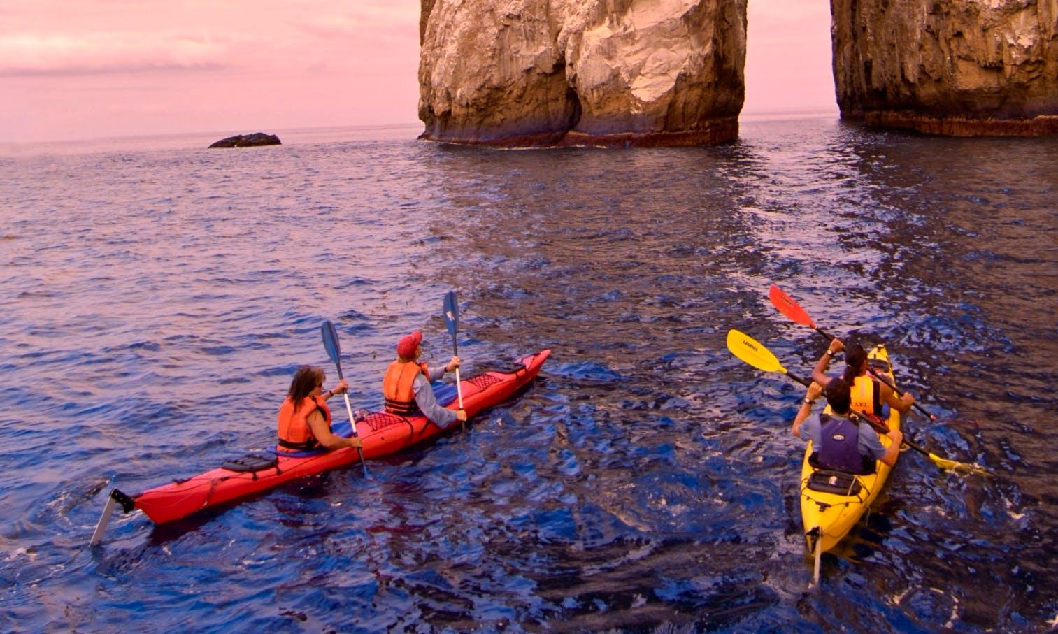 Enjoy Kayak Whale Watching Tours at Discovery Islands, British Columbia