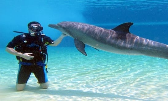 Diving Excursions And Diving Courses For Beginners In Red Sea Governorate, Egypt