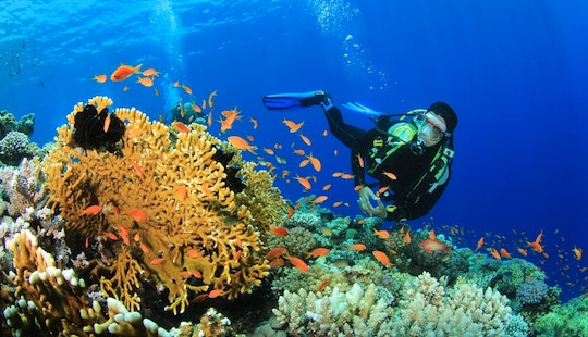 Diving Trips And Courses In Red Sea Governorate, Egypt