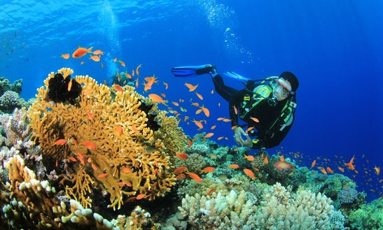 Enjoy Diving Trips & Courses In Red Sea Governorate, Egypt