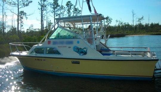 Private Dolphin Cruises In Orange Beach, Alabama