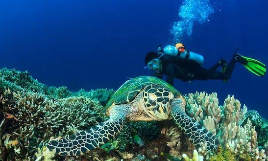Enjoy Diving Trips & Courses In Komodo, Nusa Tenggara Timur