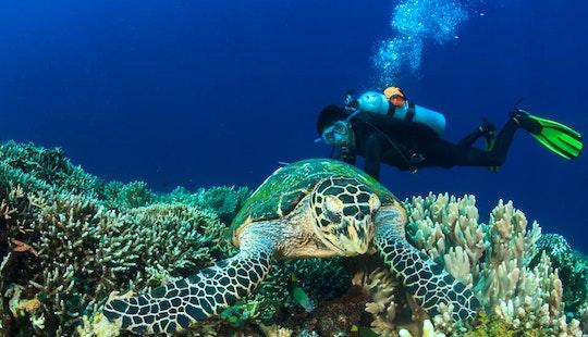 Diving Trips And Courses In Komodo, Nusa Tenggara Timur