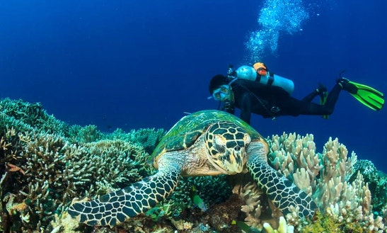 Enjoy Diving Trips & Courses In Komodo, Nusa Tenggara Timur