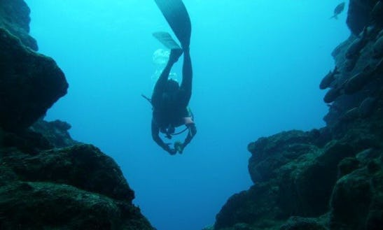 Enjoy Diving Trips & Courses In Tamarin, Mauritius