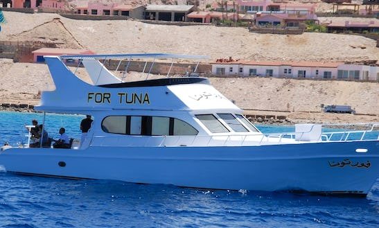 Charter For Tuna Motor Yacht In Suez Governorate