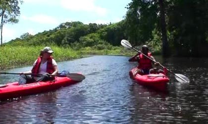 Guided Kayaking on Coropina Creek in Paramaribo, Suriname