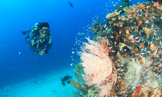 Enjoy Diving Trips In Gerokgak, Bali