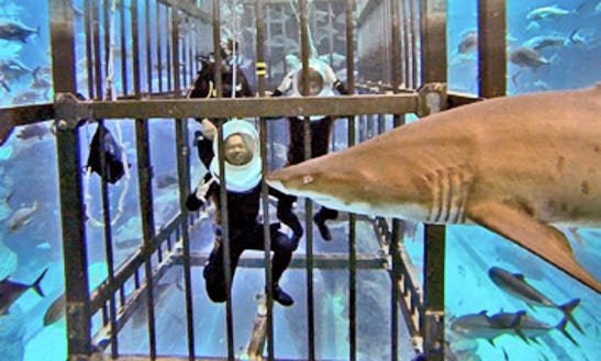 Shark Walker In Dubai, United Arab Emirates