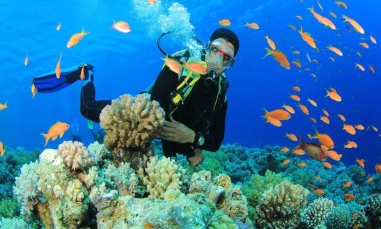 Enjoy Diving Trips And Lessons In Nha Trang, Khanh Hoa